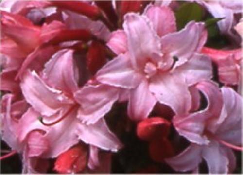 Blüten im Par der Gärten