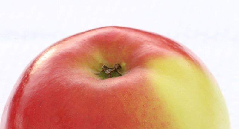 Obst u. Zierobst
