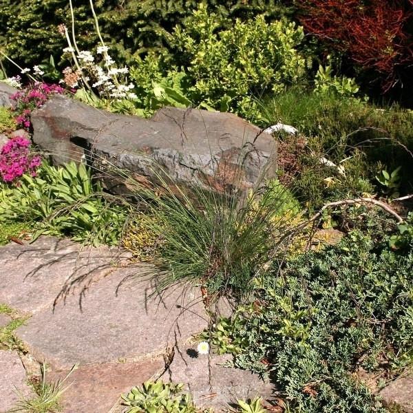 Regenbogenschwingel Red Point - großer Topf - Festuca amethystina