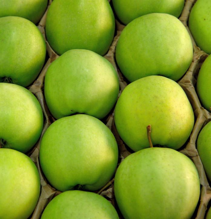 Apfelbaum Granny Smith 60-80cm - feinsäuerlich Lagerapfel