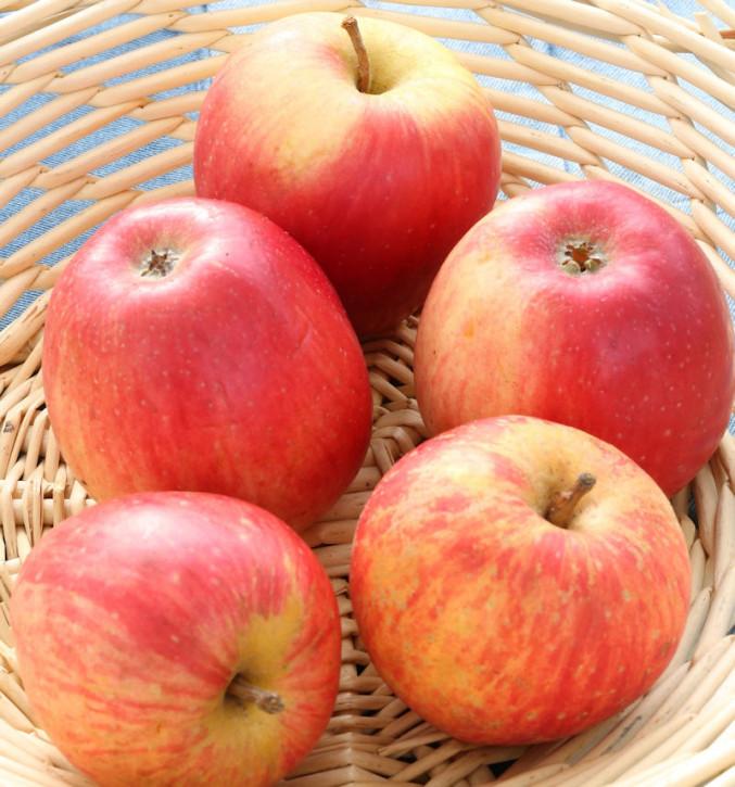 Apfelbaum Doppelpison 60-80cm - für Apfelmus oder Apfelsaft