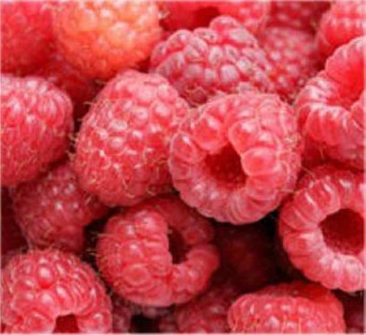Himbeere Autumn Bliss - Rubus idaeus