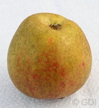 Apfelbaum Adamsparmäne 60-80cm - fest und edel