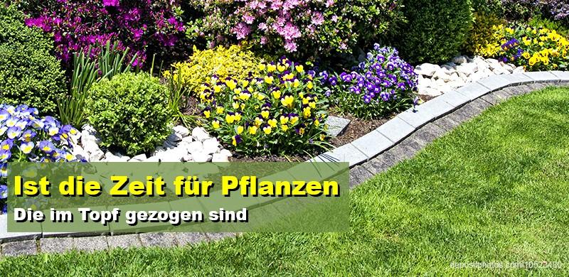 Sommer Garten Pflanzen Blumen Neues Neuigkeiten