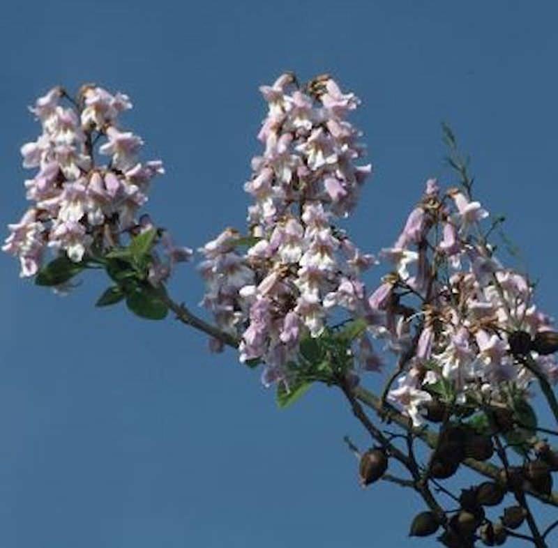 Glockenbaum