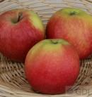 Apfelbaum Gala 60-80cm - saftig und süß Lagerapfel