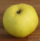 Apfelbaum Seestermühler Zitronenapfel 60-80cm - saftig und leicht säuerlich