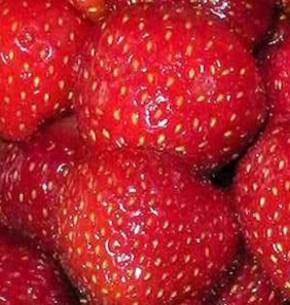 Garten Erdbeere Marieva Macherauch - Fragaria ananassa