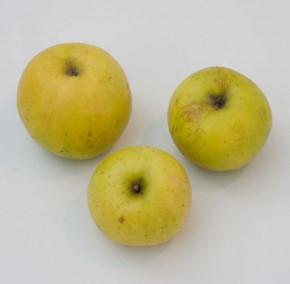 Apfelbaum Batull 60-80cm - robust und saftig