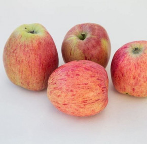 Apfelbaum Bohlenapfel 60-80cm - Frühapfel saftig