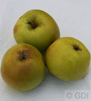 Apfelbaum Boikenapfel 60-80cm - feinwürzig und mild