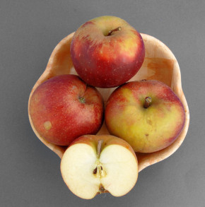 Apfelbaum Hadelner Rotfranch 60-80cm - edel und feinwürzig