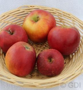 Apfelbaum Reitländer 60-80cm - fest und knackig